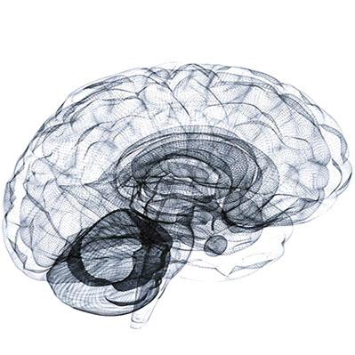 child brain